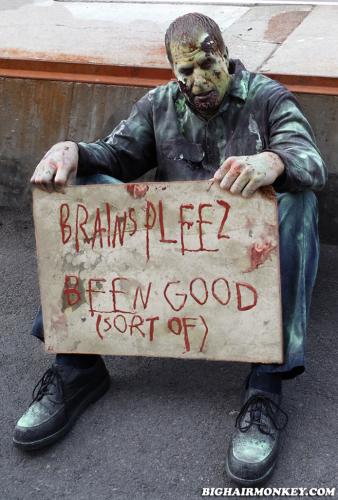 homeless Zombie will work for brains brainz
